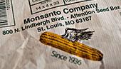OGM-e-cose-che-fanno-specie16